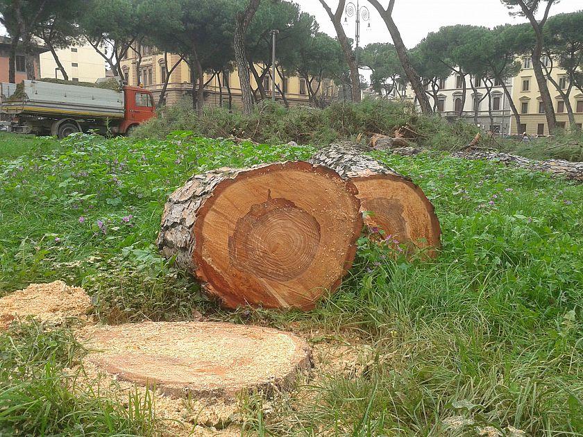 Foreste dal legno un 39 opportunit di lavoro nove da firenze for Legno arredamento trova lavoro in toscana