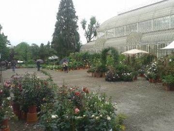 Giardino dell orticoltura al via una grande - Giardino dell orticoltura firenze ...