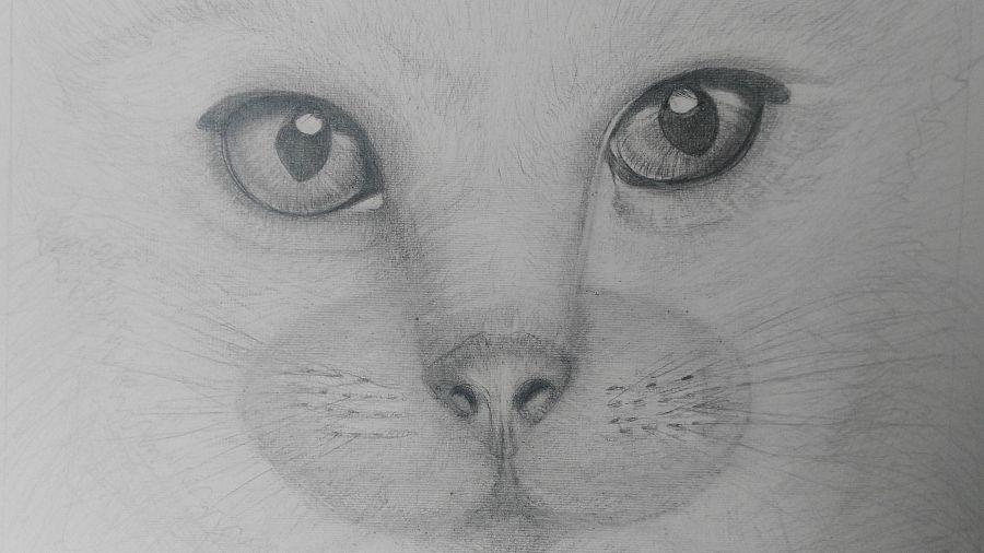 Disegni Matita Animali Migliori Pagine Da Colorare